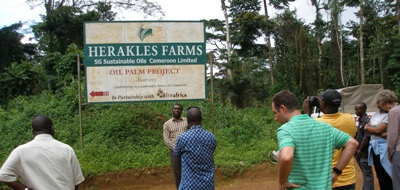 Herakles Farms must stop Unjust Lawsuits Against a Cameroonian Activists