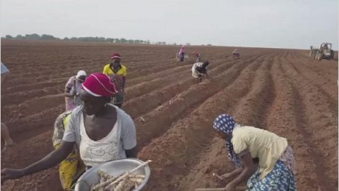 ECOWAS and Partners Want Protection of Women's Rights in Agriculture and Access to Land